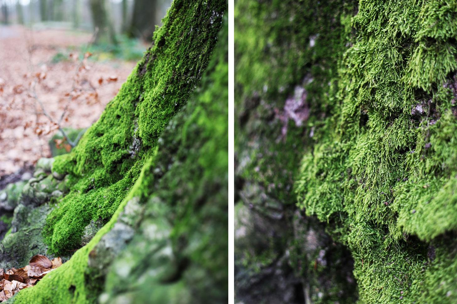 Wald_2_3